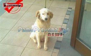 Abgola dog